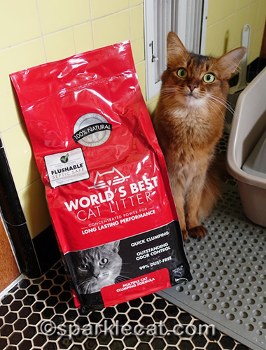 somali cat with bag of World's Best Cat Litter