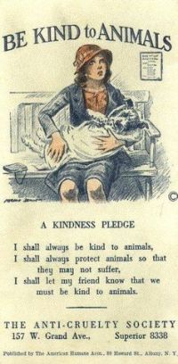 kind to animals