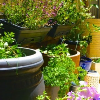 DIY – 5 Tips For A Rustic Herb Garden….(in a small space)!