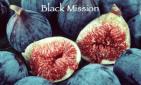 Black Mission Fig Aged Balsamic Vinegar