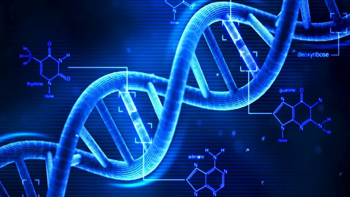 DNA Upgrade To 60 Strands