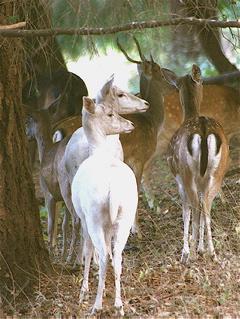 small-herd-inthetrees2.jpg