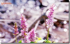 forest_spring__62