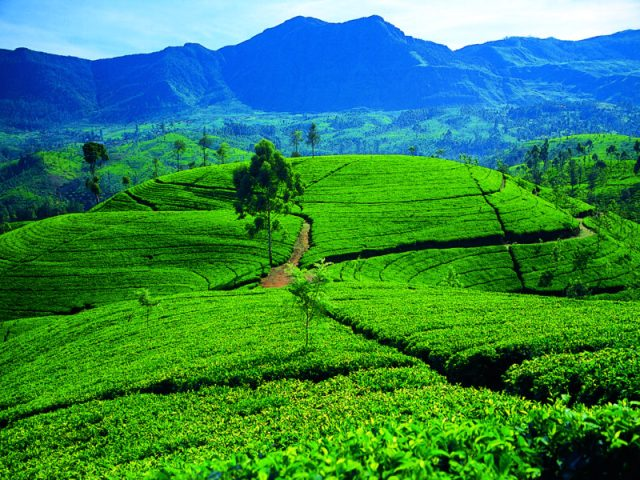 An adventure through Sri Lanka, the 'land of serendipity'
