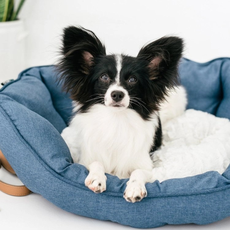 Best Pet Gifts Dog Bed
