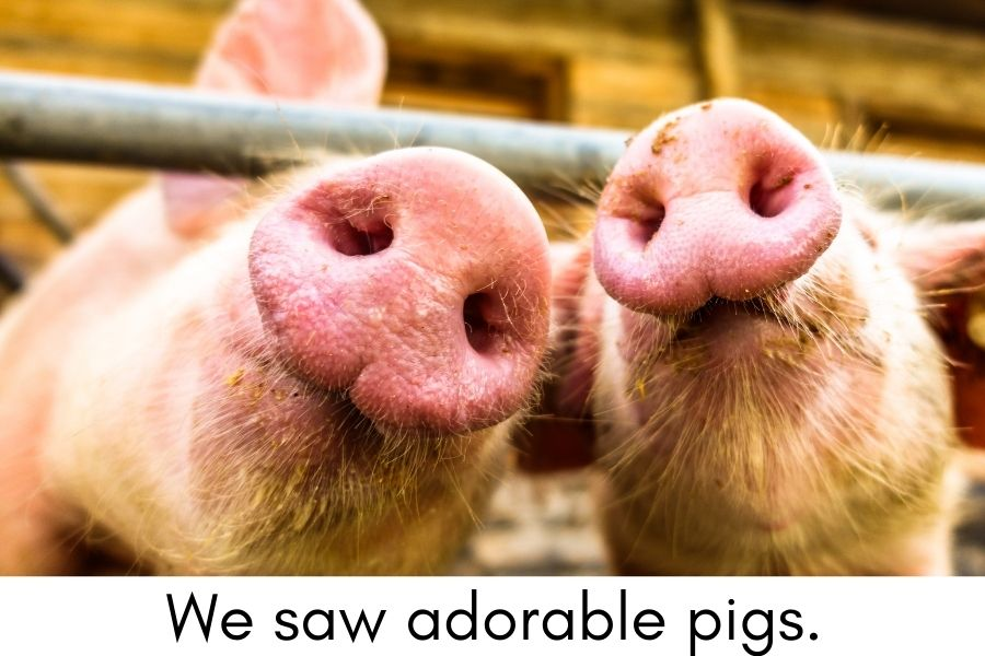 Experience Books for Kids with Autism - cute pigs at the farm