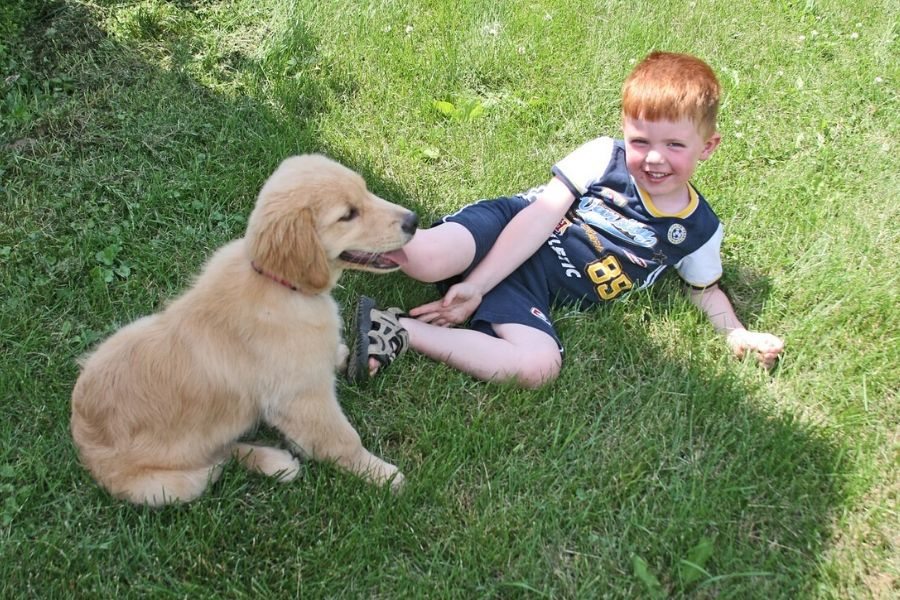 young boy with red hair lying on the grass with a golden retriever puppy