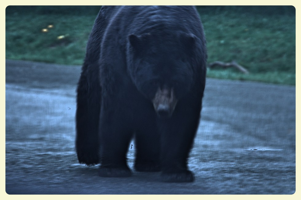 Bear at the Thoiry Zoo. Special Learning House. www.speciallearninghouse.com.