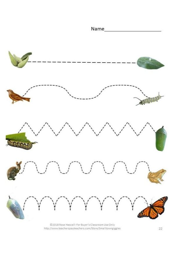 autism worksheets - nature and insects