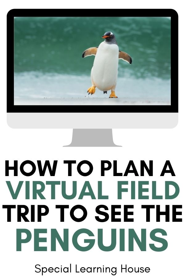 see the penguins with a penguin virtual fiels trip