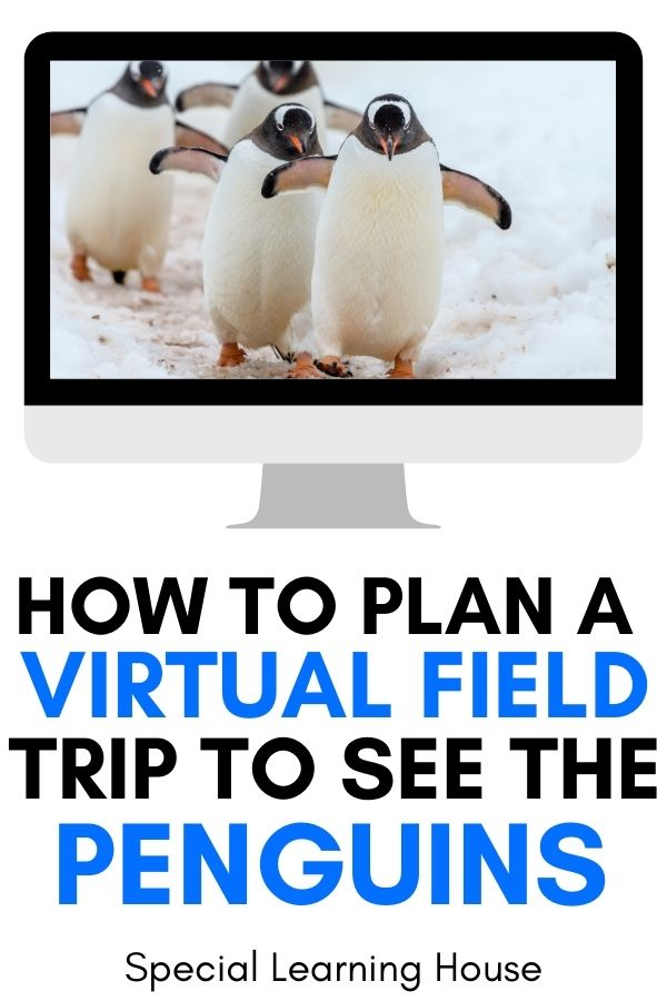 Virtual Field Trip to See the Penguins Cover 600x900