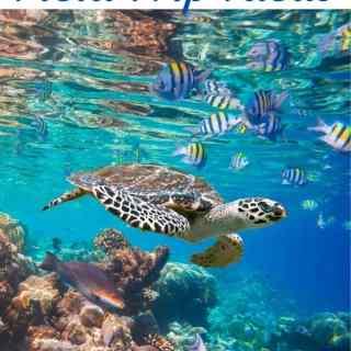 Virtual Ocean Field Trip Ideas
