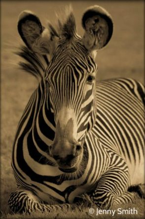 """Doctors are taught: """"When you hear hoofbeats, think of horses not zebras"""" and so may miss many rare diagoses!"""