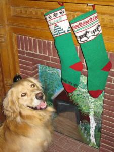 golden retriever with Christmas stocking