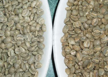 Green Coffee Beans Process Comparison
