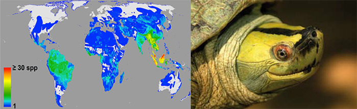 Map of Threatened Species / Burmese Roofed Turtle