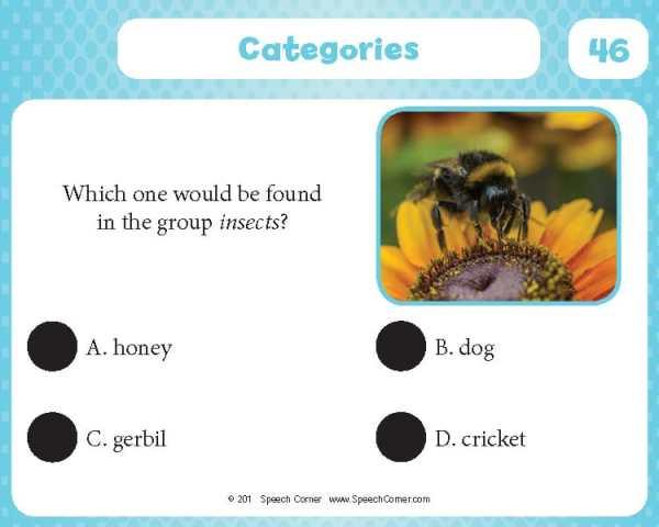 Spot On! Categories-4332