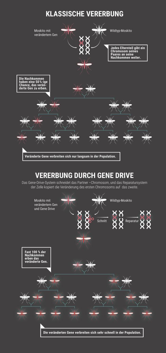 """Der """"Gene Drive"""""""
