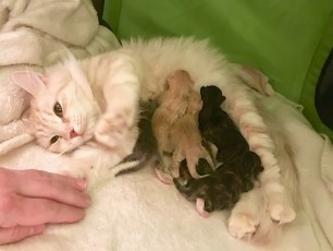 Mirra's Litter B at birth