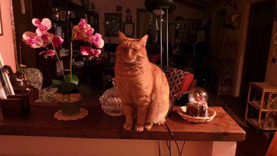 Festa del Gatto, Spello ospita una mostra-concorso dedicata all'animale domestico più affascinante