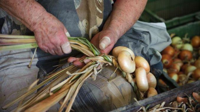 Festa della Cipolla di Cannara, al via da mercoledì 2 settembre