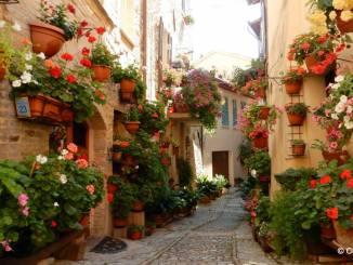 Spello capitale dei Comuni Fioriti d'Italia l'11 e il 12 novembre