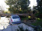 albero-su-auto (2)