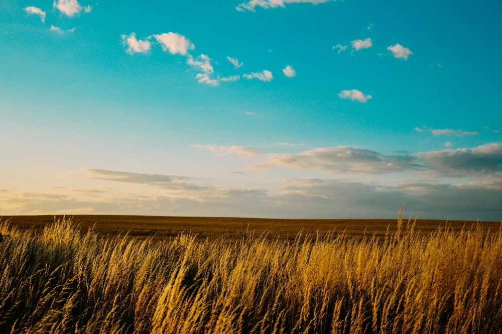 earth, gold, field, straw