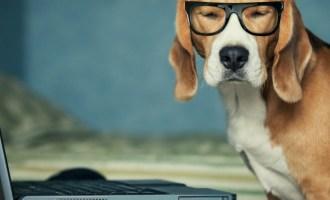 dog glasses entrepreneurs