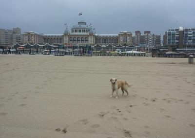 Kurhaus Scheveningen, The Hague