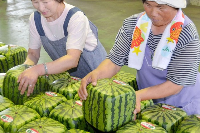 Japan square watermelons - fun facts about Japan