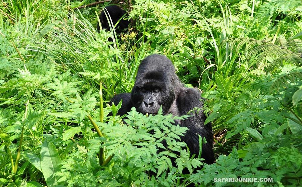 Rwanda - an ultimate bucket list destination