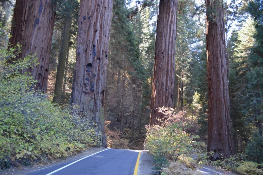 Top camping spots in California: Sequoia National Park