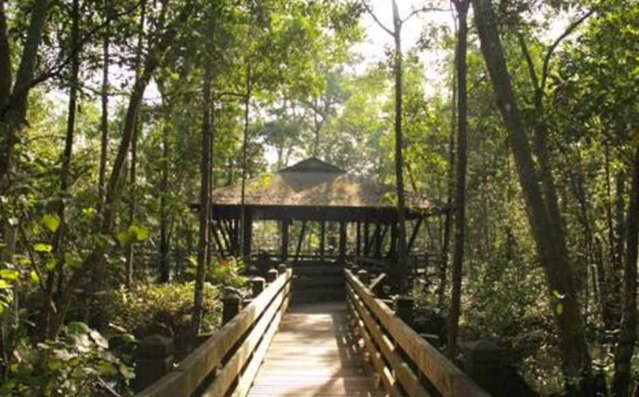 Things to do in Singapore: Sungei Buloh Wetland Reserve