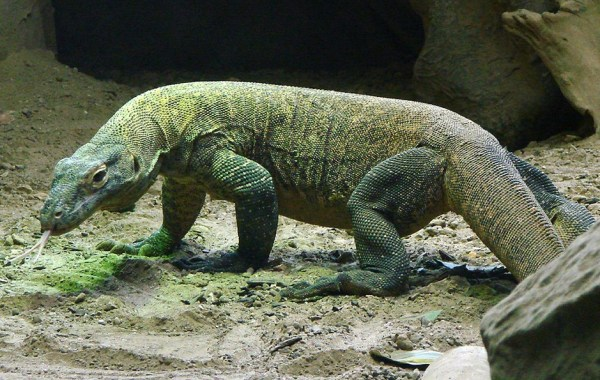 what_not_to_miss_in_indonesia_komodo