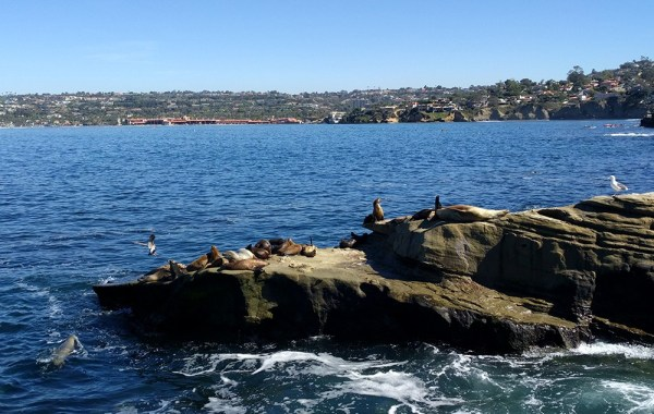 what_to_see_do_short_trip_san_diego_la_jolla_sea_lions