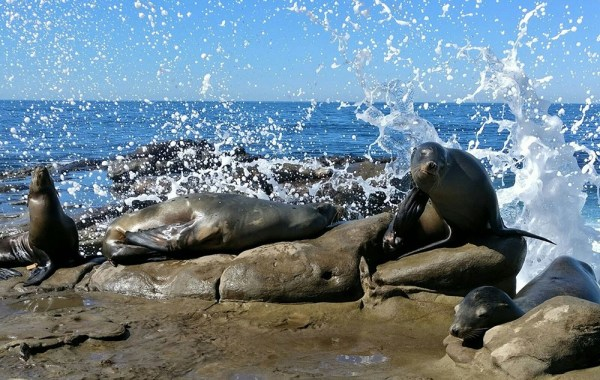 what_to_see_do_short_trip_san_diego_lajolla_sea_lions