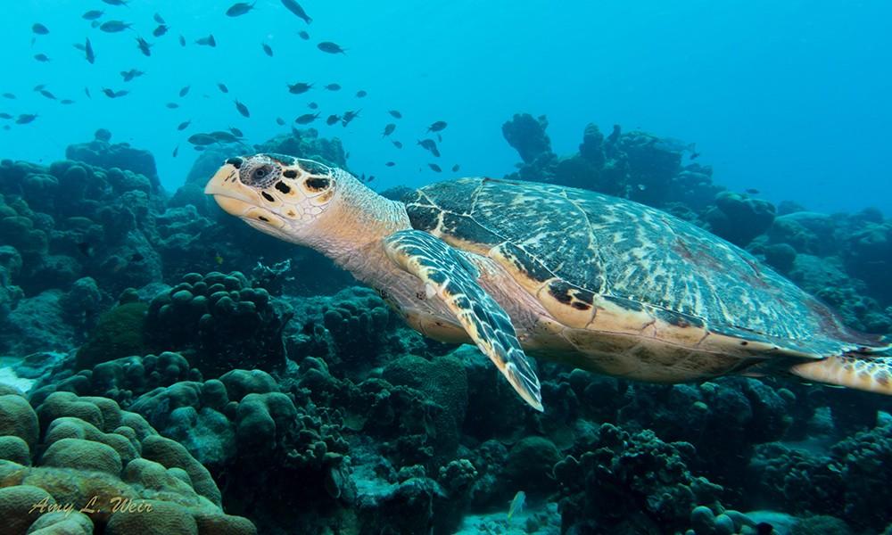 The best dive site off Bonaire's east coast