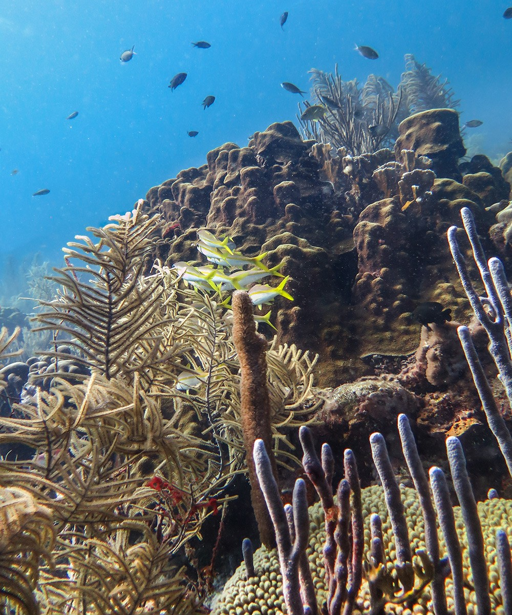 Rappel: one of the best dive sites in Bonaire