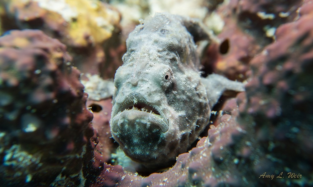 Something Special: one of the best dive sites in Bonaire