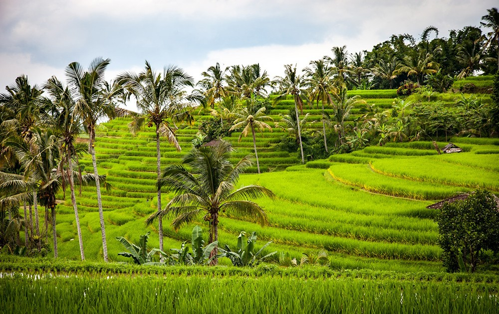 Why digital nomads love Bali