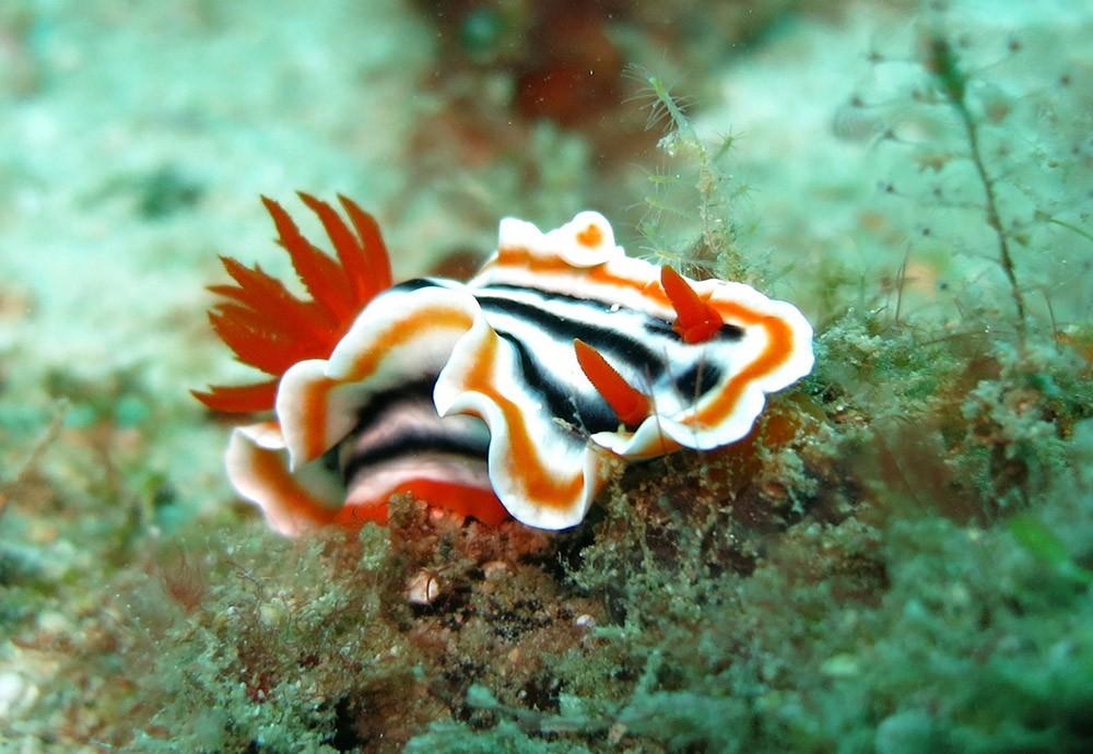 Best snorkeling spots in Palawan - Dimakya Island
