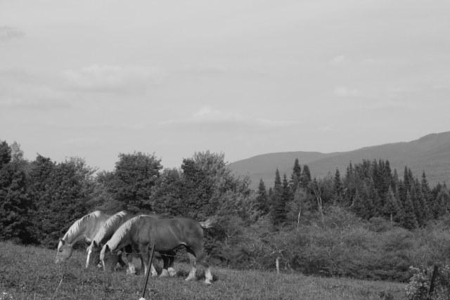 Horses - Zoom