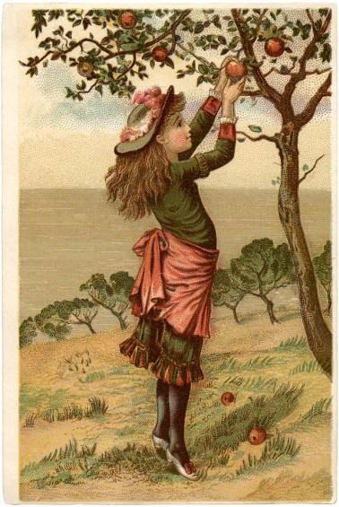 vintage-apple-picking-image-graphicsfairy