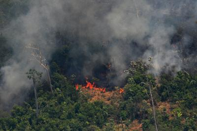 L'Amazzonia brucia, l'appello social dallo spettacolo italiano