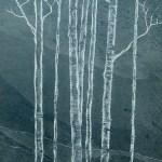 Silver birch trees cared in slate