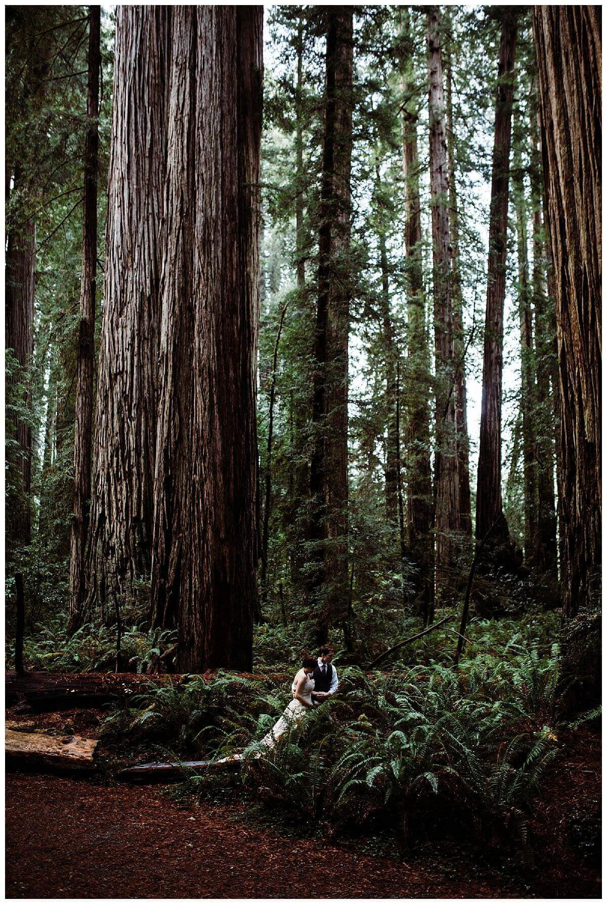 California Coastal Redwoods Elopement | S Photography | Pacific Northwest Intimate Wedding and Elopement Photographer