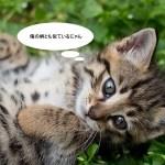 keito浅草橋でワークショップ、「べんがら染め」ってなに?