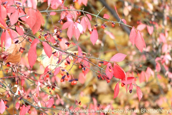Autumn Folliage