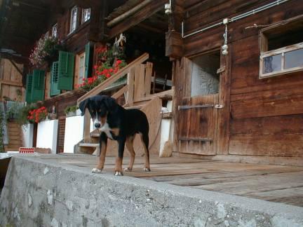 Elio vom Buchenstock, 5 1/2 Monate, zu Besuch auf dem Buchenstock